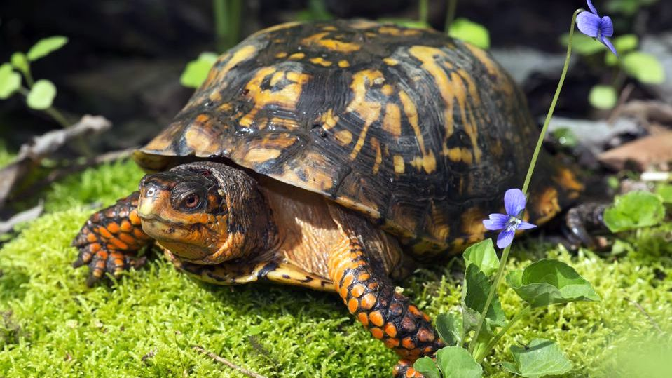 turtle eating aquatic food